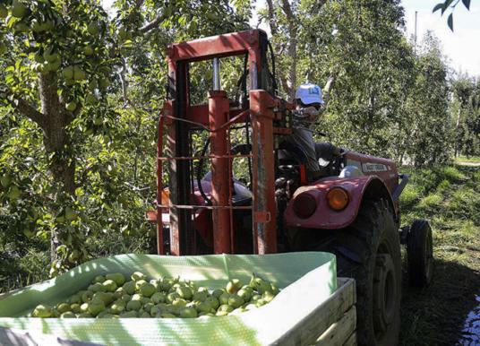El sindicato de la fruta acordó un aumento global del 40,5 por ciento