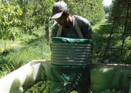 Río Negro continúa recibiendo trabajadores migrantes